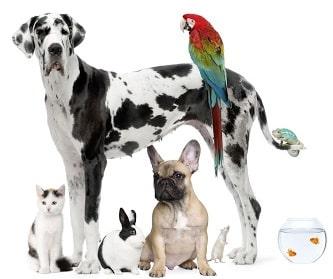 SMS para clínicas veterinarias